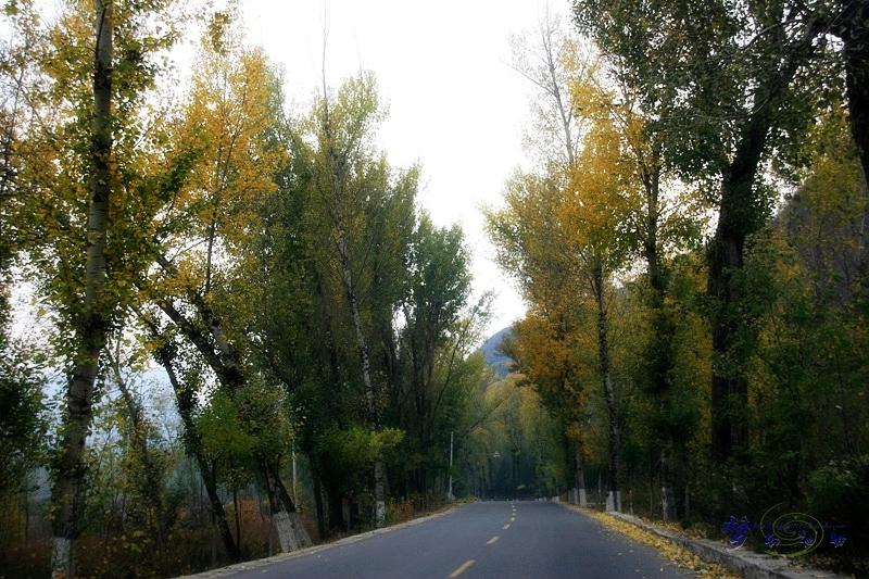 如同巨大的泼墨水彩画,河谷中,密集的树林,秋草,小河在阴翳的雾气中融