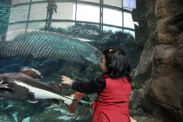 憋了好久,终于等到北京蓝蓝的天上白云飘了,于是赶紧拉上爸爸,一起去动物园喽!百合去年3月份去过一次动物园,那时还不到一岁,只是走马观花地浏览一遍,对动物还没有什么概念。记得一位育儿专家说过,孩子两岁前见到的东西一定要实体化,所以这次游动物园的意义大多了,此前在图画书上的动物要一一对应,大象艾玛到底是什么样?小熊teddy是什么样?大老虎?大熊猫?海狮?哇!太多了,赶紧去看看吧
