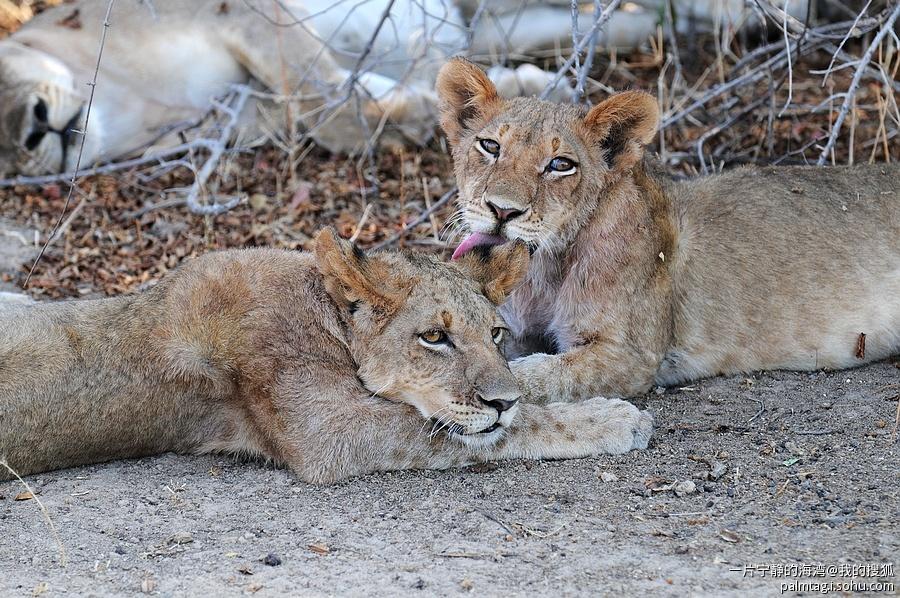 野性非洲(1)-- 精彩纷呈的非洲野生动物