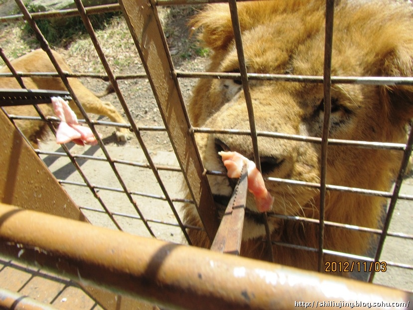 日语日记32——九州野生动物园
