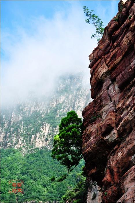 风景画悬崖青松