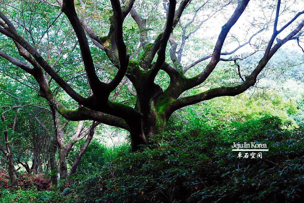 图游韩国济州岛;