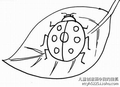 七星瓢虫与树叶简笔画