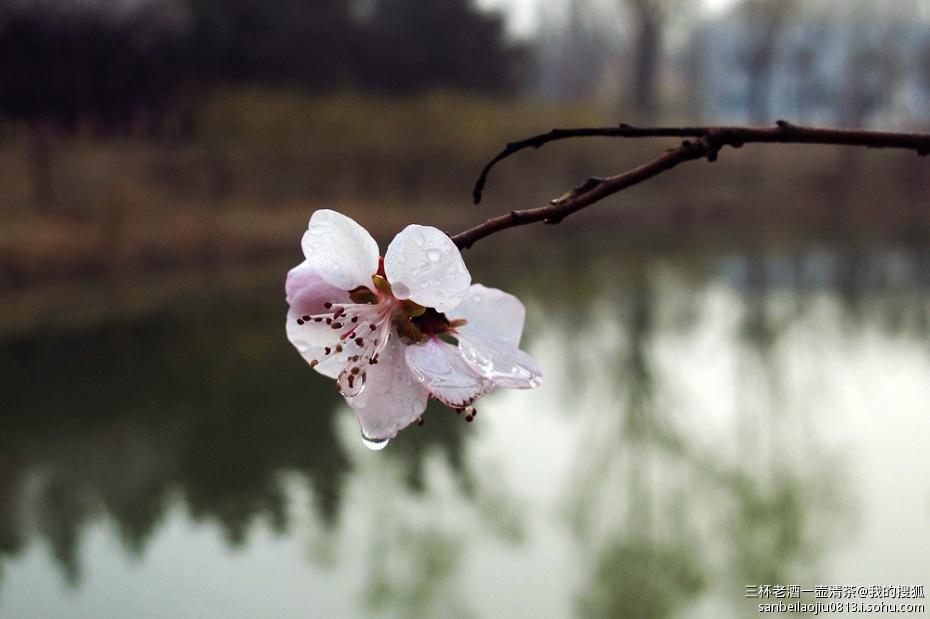 北京的春天之:雨后森林公园清新的空气