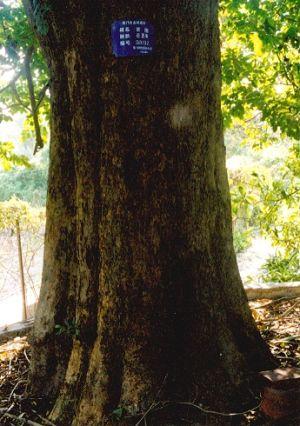 名贵木材树种-刘-搜狐博客