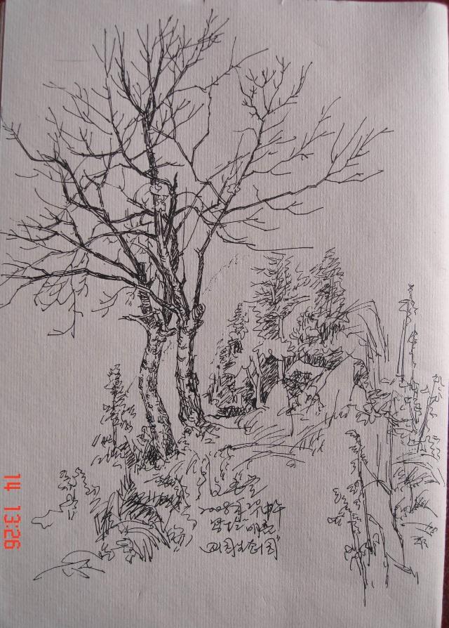 钢笔速写——树-竹影轩-我的搜狐