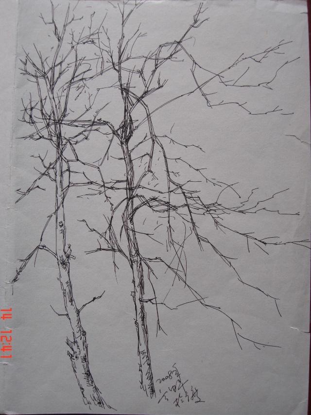 钢笔速写 树