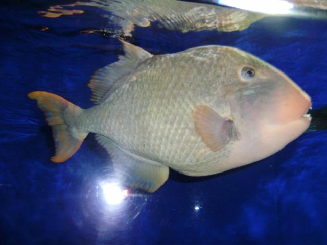 海里面最厉害的动物是什么?