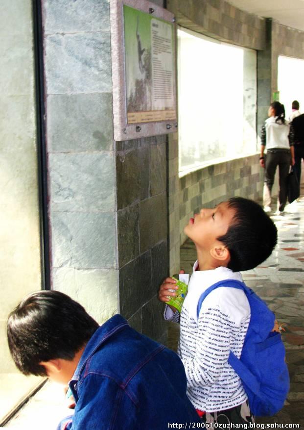 金丝猴馆、珍稀动物馆、狮狒馆一个个走下来,孩子们兴致很