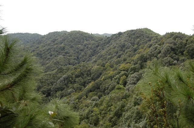 茶文化风情园骑行有感 (丁一木赠诗,五老山和旗山照片