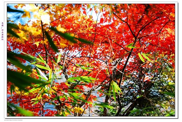红绿 森林背景素材