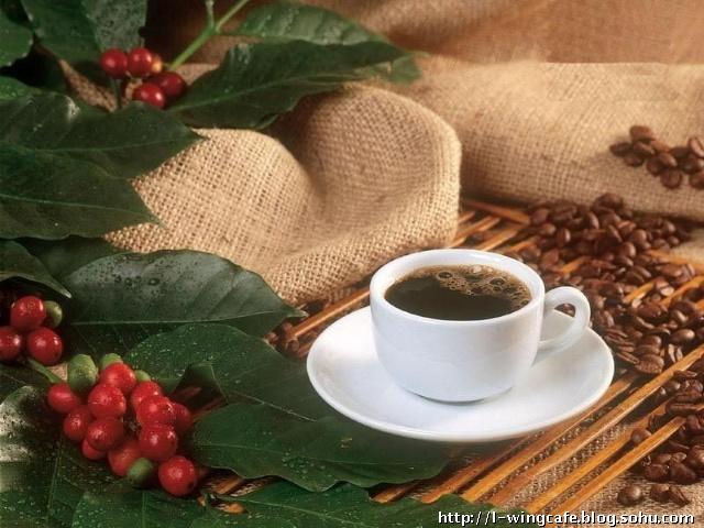 咖啡果果实结构图片