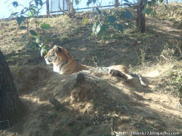 八达岭野生动物园(图)