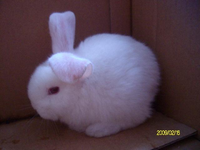 2岁5月 你的小白兔