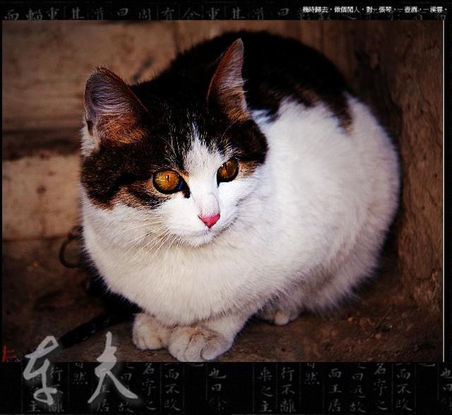 简单而又可爱的猫咪