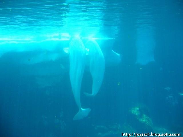 北极动物高清图片