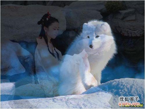 雪地上的小脚印 猫的世界