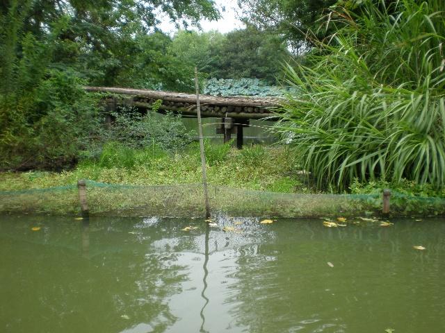 西溪将重现秋雪庵八景-杭州湿地保护显效 一曲溪流一曲烟 重现