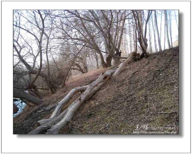 说一说木头沟