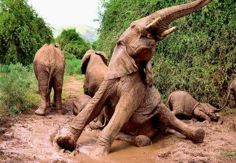 正在流血的森林  重蹈恐龙覆辙的大象 - 行者 - 《行者》旅游卫视