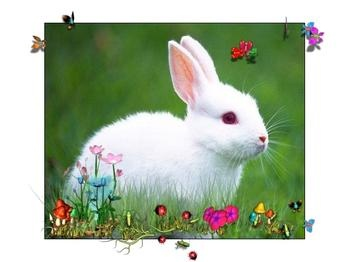 小白兔最爱吃白菜和萝卜