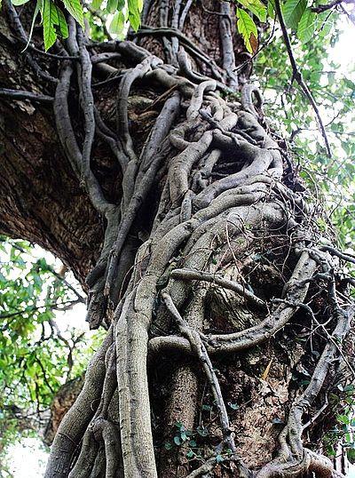 壁纸 树 树根 400_538 竖版 竖屏 手机