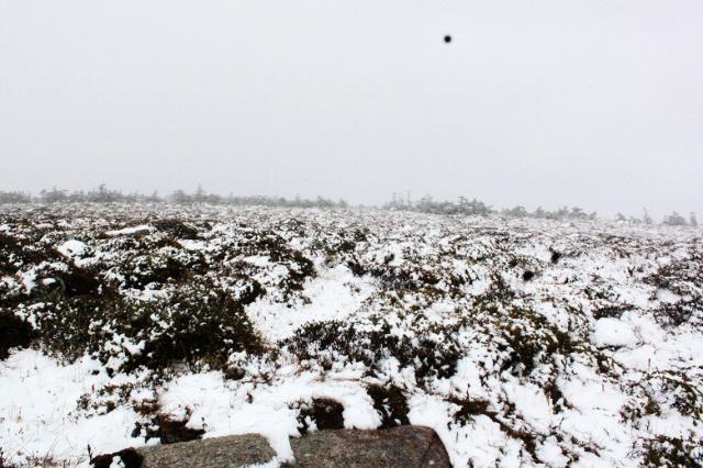 qq头像冬景