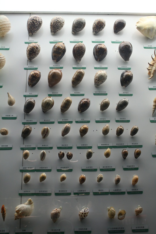 软体动物的外套膜,具有一种特殊的腺细胞,其分泌物可形成保护身体