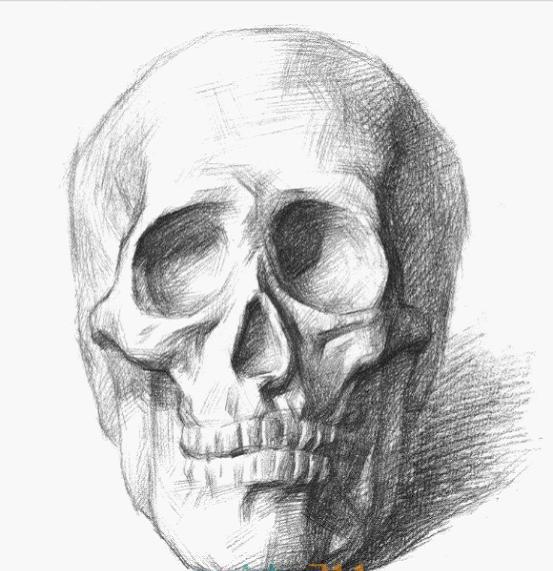 素描 鼻子 静物 石膏展示