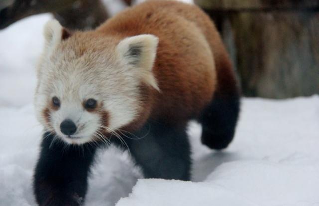 在赫尔辛基动物园小觑芬兰动物福利