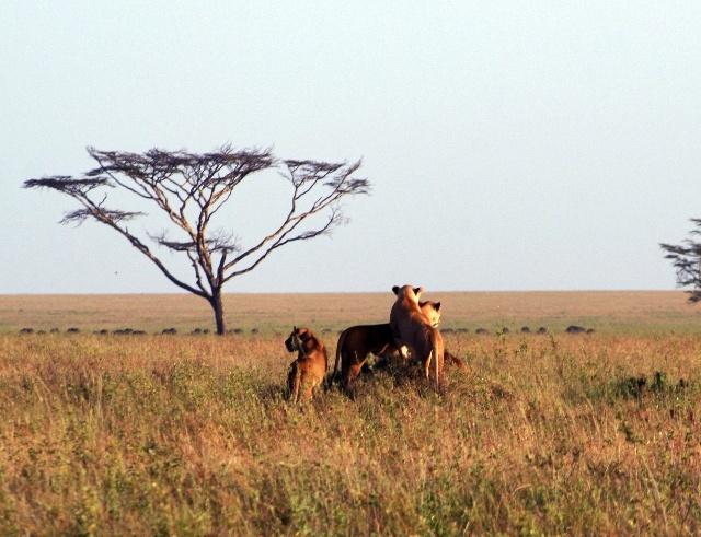 象群等众多动物); 非洲野生动物园