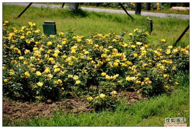 五月的鲜花,开遍了原野